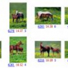 A scalable integrated region-based image retrieval system