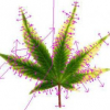 Boosted cannabis image recognition