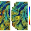 Diffusion Smoothing on Brain Surface via Finite Element Method