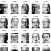 Facial similarity across age disguise illumination and pose