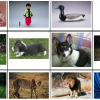 An exploration of diversified user strategies for image retrieval with relevance feedback