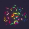 Minimum entropy segmentation applied to multi-spectral chromosome images