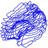 Modeling Brain Anatomy with 3D Arrangements of Curves