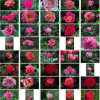 Precision-Oriented Active Selection for Interactive Image Retrieval