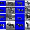 Shape Guided Object Segmentation