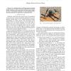 The true role of accelerometer feedback in quadrotor control